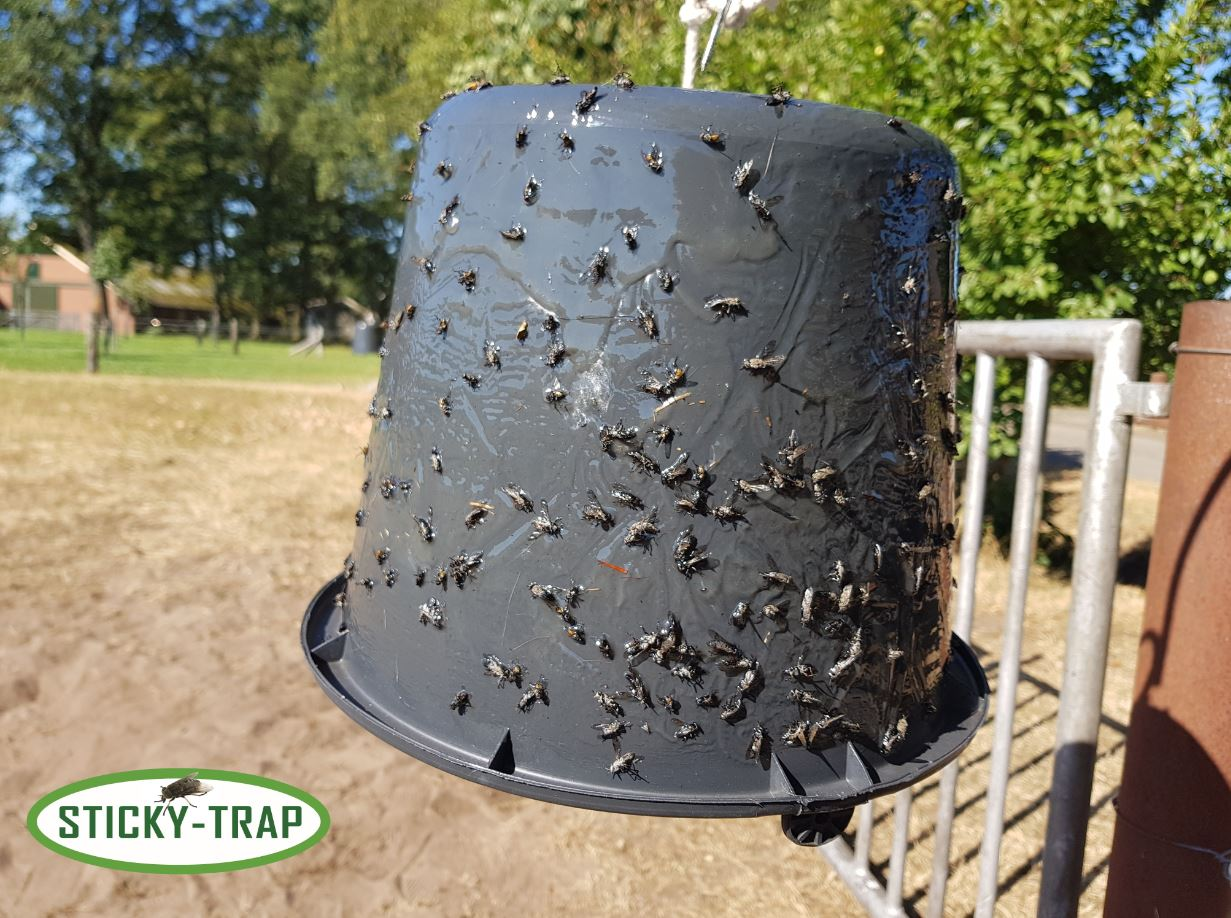 Sticky Trap bucket with biting  flies